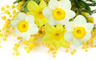 Yellow Spring Flowers Uk  37 Widescreen Wallpaper