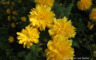 Yellow Spring Flowers Uk  5 Desktop Wallpaper