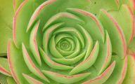 9 Red Flower Wallpaper Border  2 Desktop Background