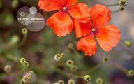 9 Red Flower Wallpaper Border  21 Widescreen Wallpaper