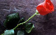 9 Red Flower Wallpaper Border  9 Cool Wallpaper