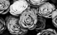 Black And White Rose Wallpaper  17 Cool Hd Wallpaper