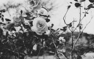 Black And White Rose Wallpaper  6 Cool Wallpaper