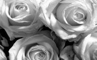 Black And White Rose Wallpaper  8 High Resolution Wallpaper