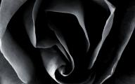 Black Rose Wallpaper  9 Wide Wallpaper