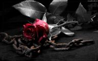 Black Rose Wallpaper Images  11 Hd Wallpaper