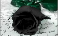 Black Rose Wallpaper Images  15 Widescreen Wallpaper