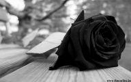 Black Rose Wallpaper Images  3 Background Wallpaper