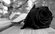Black Rose Wallpapers  4 Background