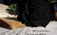 Black Rose Wallpapers  8 High Resolution Wallpaper