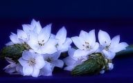 Blue And White Flower Wallpaper  4 Cool Wallpaper