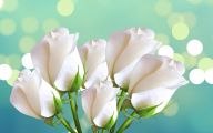 Blue And White Rose Wallpaper  16 Hd Wallpaper