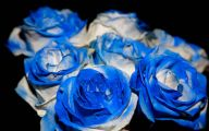 Blue And White Rose Wallpaper  24 Wide Wallpaper
