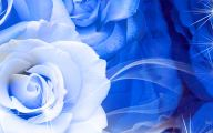 Blue And White Rose Wallpaper  6 Hd Wallpaper