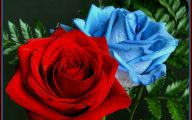 Blue And White Rose Wallpaper  7 Cool Wallpaper