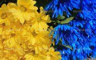 Blue And Yellow Flower Wallpaper  19 High Resolution Wallpaper