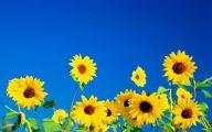 Blue And Yellow Flower Wallpaper  2 Desktop Wallpaper