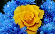 Blue And Yellow Rose Wallpaper  11 Widescreen Wallpaper