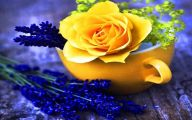 Blue And Yellow Rose Wallpaper  16 Hd Wallpaper