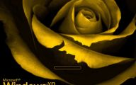Blue Green Rose Wallpaper For Blackberry  11 Wide Wallpaper
