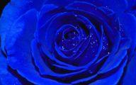 Blue Rose Wallpaper  61 Background