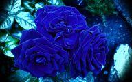 Blue Rose Wallpaper  67 Hd Wallpaper