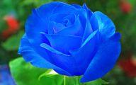 Blue Rose Wallpaper  68 Background