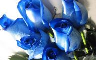 Blue Rose Wallpaper Border  15 Cool Wallpaper
