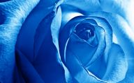 Blue Rose Wallpaper Border  2 Widescreen Wallpaper