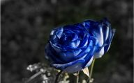 Blue Rose Wallpaper For Desktop  11 Widescreen Wallpaper