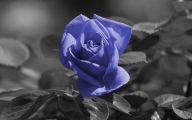 Blue Rose Wallpaper For Desktop  14 Widescreen Wallpaper