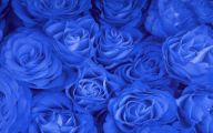 Blue Rose Wallpaper For Desktop  16 Wide Wallpaper