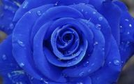Blue Rose Wallpaper For Desktop  17 Free Hd Wallpaper