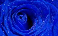 Blue Rose Wallpaper For Desktop  20 Wide Wallpaper