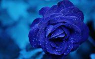 Blue Rose Wallpaper For Desktop  25 Cool Wallpaper