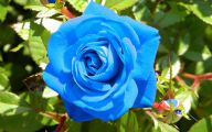 Blue Rose Wallpaper For Desktop  28 Free Wallpaper