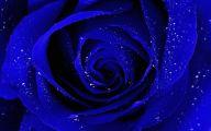 Blue Rose Wallpaper For Desktop  33 Desktop Wallpaper