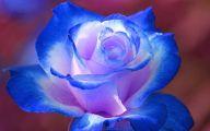 Blue Rose Wallpaper For Desktop  4 Desktop Background