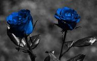 Blue Rose Wallpaper For Desktop  8 Desktop Background