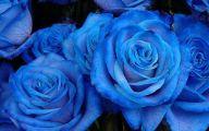 Blue Roses Wallpaper  1 Background Wallpaper