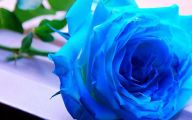 Blue Roses Wallpaper  11 Free Wallpaper