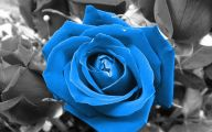 Blue Roses Wallpaper  20 Background