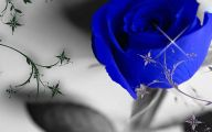 Blue Roses Wallpaper  35 Wide Wallpaper