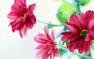 Flower Wallpaper  126 Cool Wallpaper