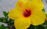 Flower Wallpaper  184 Desktop Wallpaper