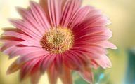 Flower Wallpaper  260 Background