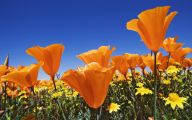 Flower Wallpaper Big Size  13 Desktop Wallpaper