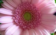 Flower Wallpaper Big Size  15 Widescreen Wallpaper