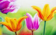 Flower Wallpaper Download  24 Cool Hd Wallpaper