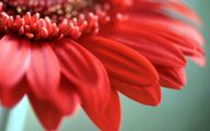 Flower Wallpaper For Android  1 Background Wallpaper